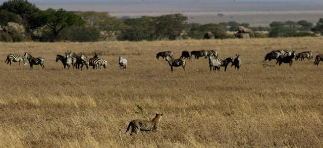 Day 19 - Serengeti - 33