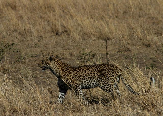 Day 19 - Serengeti - 37