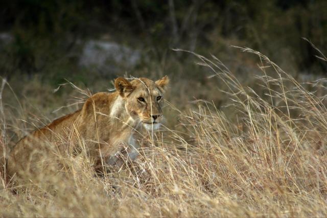 Day 19 - Serengeti - 46