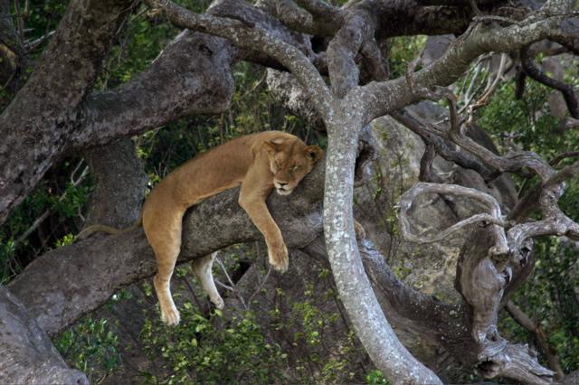 Day 19 - Serengeti - 47