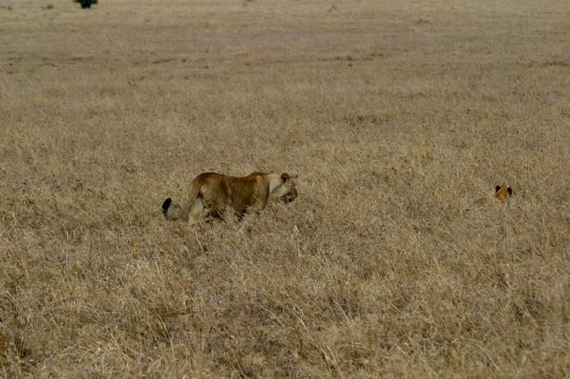 Day 19 - Serengeti - 48