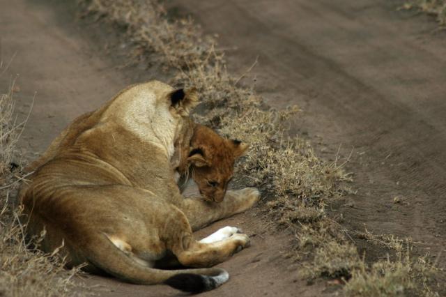 Day 19 - Serengeti - 51