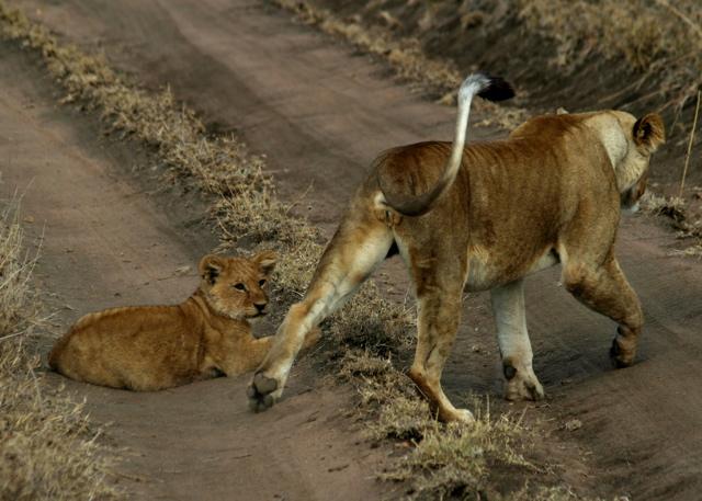 Day 19 - Serengeti - 52