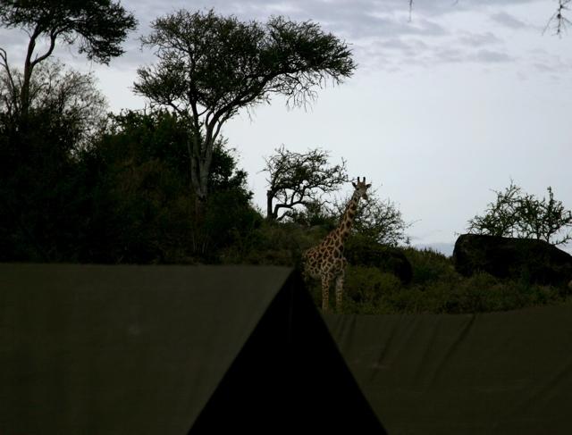 Day 20 - Serengeti & Fly to Nairobi - 1