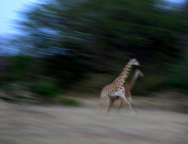 Day 20 - Serengeti & Fly to Nairobi - 2