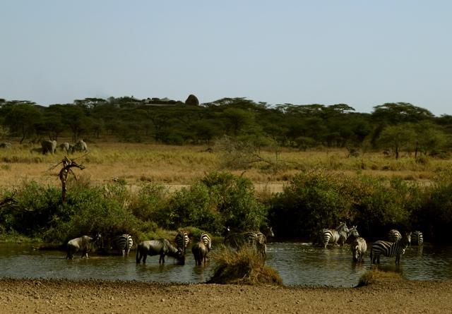 Day 20 - Serengeti & Fly to Nairobi - 32