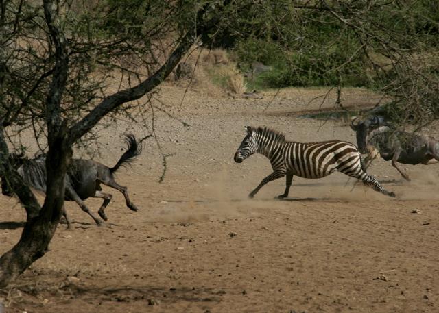 Day 20 - Serengeti & Fly to Nairobi - 33