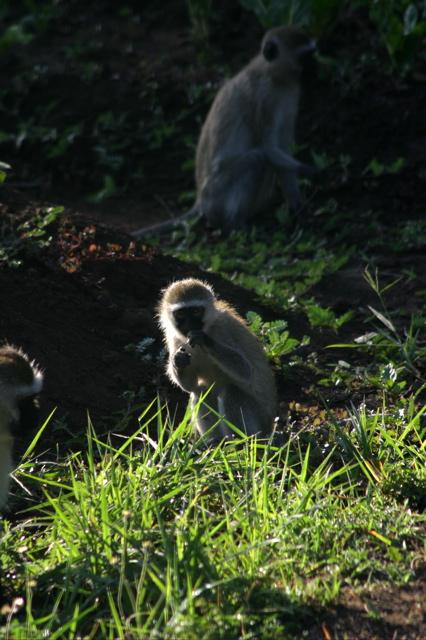 Day 4 - Tour Arusha - 7