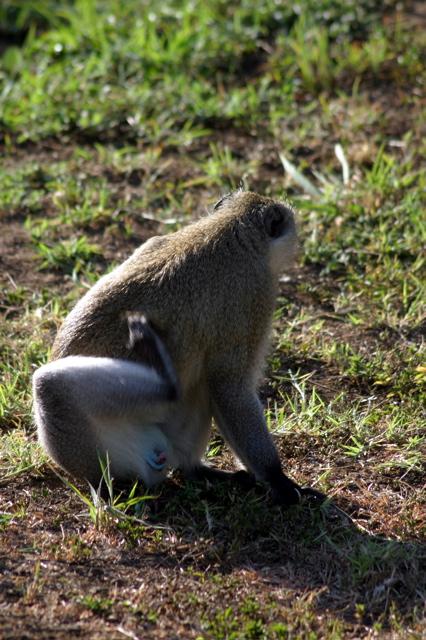 Day 4 - Tour Arusha - 8