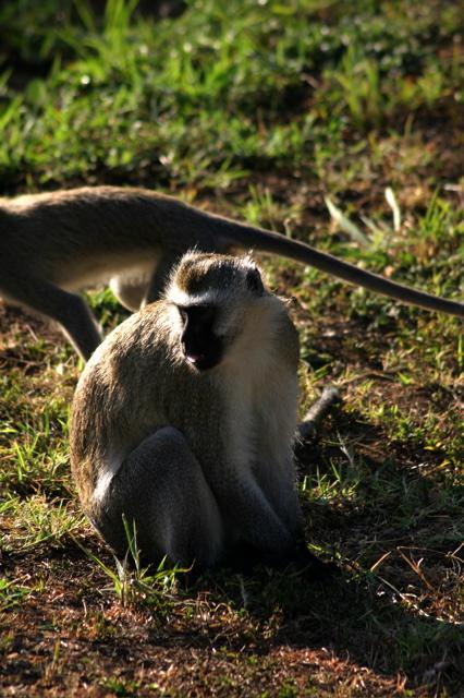 Day 4 - Tour Arusha - 9