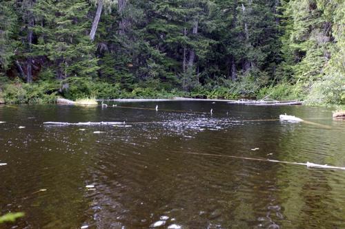 Jane lakes - 16