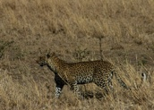 Day 19 - Serengeti - 37